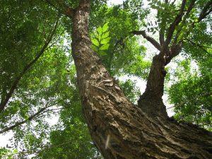 ombra albero